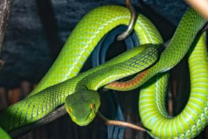 Snakes Dream Meaning And Symbolism