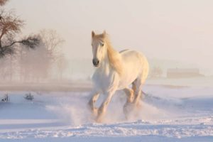Horse Dream Meaning & Spirit Animal