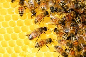 Bees And Beehive Dream Meaning