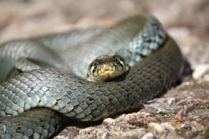 The Biblical Meaning of Snakes in Dreams